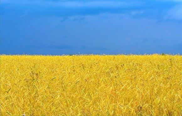Домашній кінозал. З Днем Незалежності, Україно! фото, ілюстрація