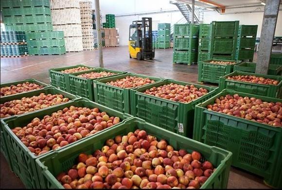Сортування яблук: досвід польських колег фото, ілюстрація