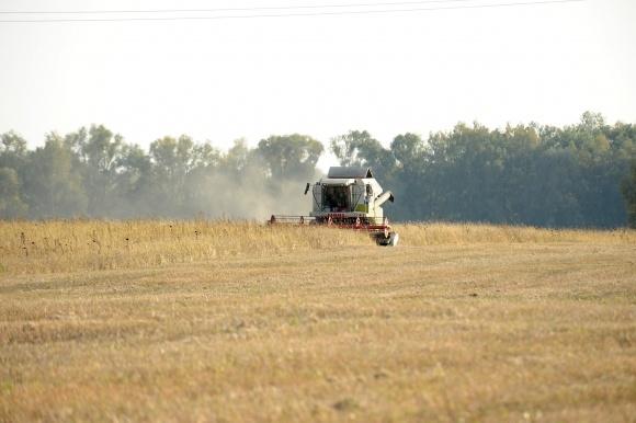 Экономика процессов: сбор зерновых фото, иллюстрация