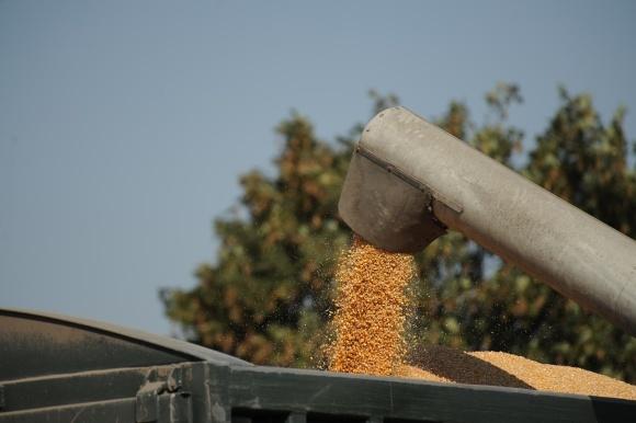 В поисках лучшей цены: ценообразование на продукцию сельского хозяйства фото, иллюстрация