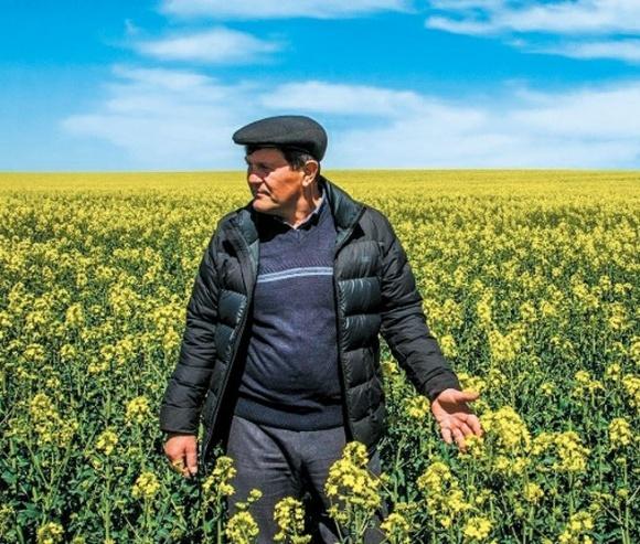 """Вирощування ріпаку на Півдні. Кейс ТОВ """"Колос"""" фото, ілюстрація"""