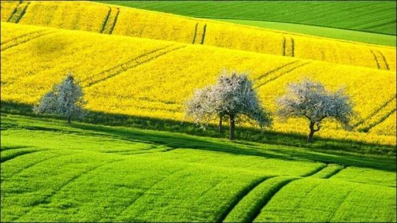 7 земельних новацій серпня фото, ілюстрація