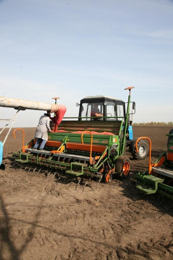 Економіка протруйників наозимій пшениці фото, ілюстрація