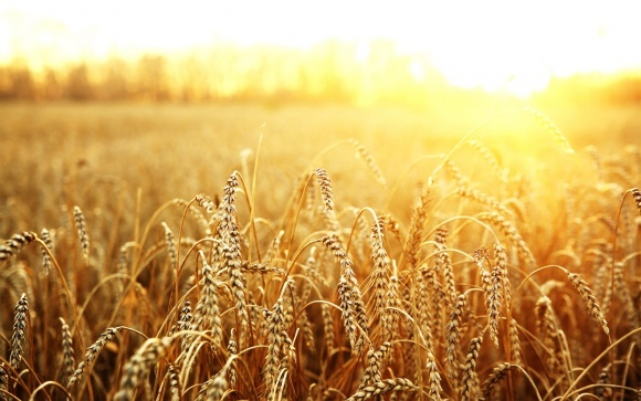 Зерновой рынок: чего ждать дальше? фото, иллюстрация