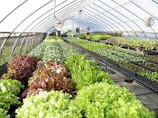 Захист овочевих культур у закритому грунті фото, ілюстрація