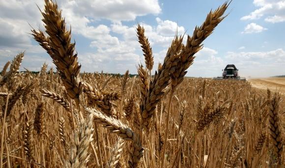 Каким быть новым стандартам на пшеницу? фото, иллюстрация