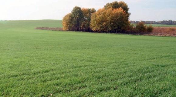 Протравливание семян перед посевом  - основное мероприятие для контроля болезней фото, иллюстрация