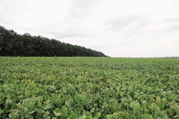 КОНВИЗО® СМАРТ — движущая сила для выращивания сахарной свеклы (окончание) фото, иллюстрация