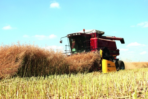 Как сократить потери озимого рапса во время сбора урожая? фото, иллюстрация