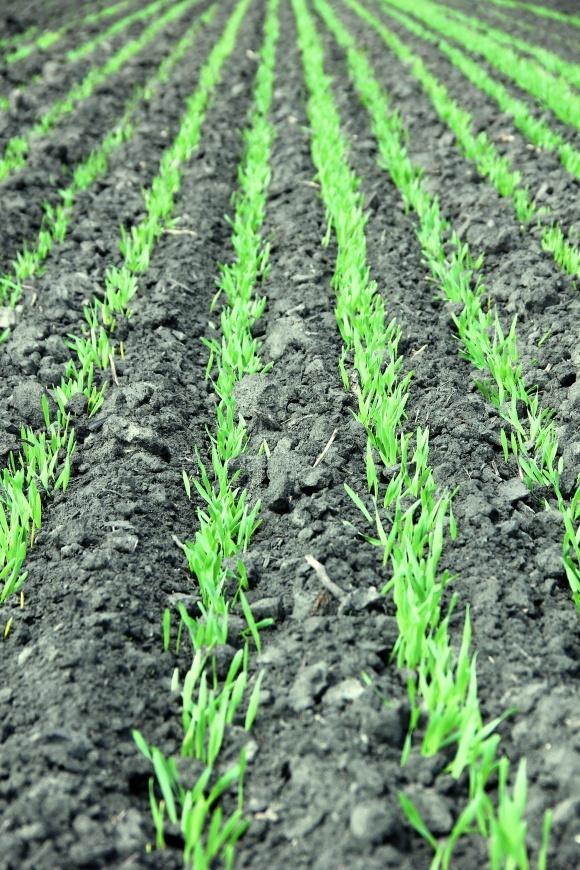 Аммиачная вода — надежный источник азота для зерновых культур фото, иллюстрация
