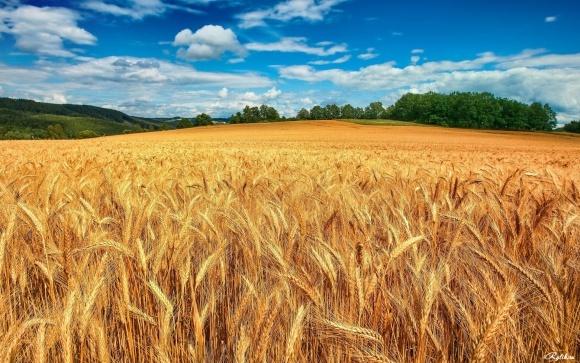 Антитранспирант для растений СОЛЮТИН: итоги применения в сельском хозяйстве 2015-2017 г.г. + ВИДЕО фото, иллюстрация