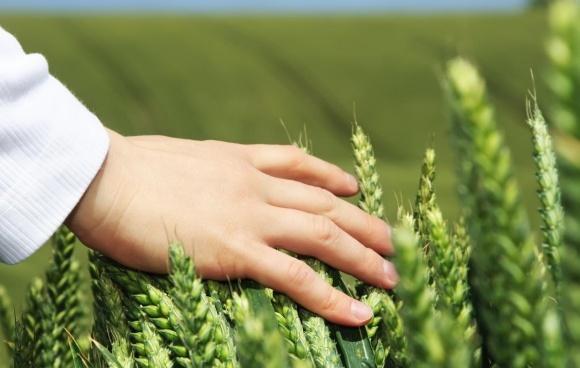 Еволюция протравливания. Что нужно аграриям в 2019 году? фото, иллюстрация