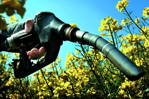 Потенциальные возможности Украины в наращивании производства биодизеля фото, иллюстрация