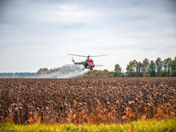 Десикация посевов подсолнечника и кукурузы продуктами бренда Раундап фото, иллюстрация