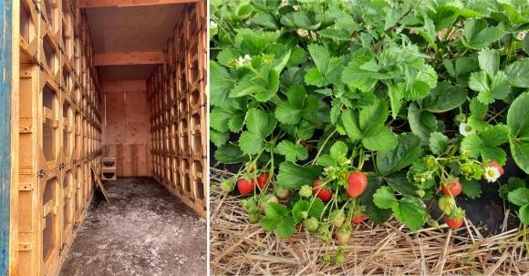 Новый тренд: органическое земледелие и пчелоопыление фото, иллюстрация