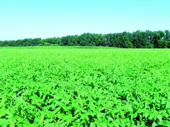 Соя в короткоротаційних сівозмінах із кукурудзою фото, ілюстрація