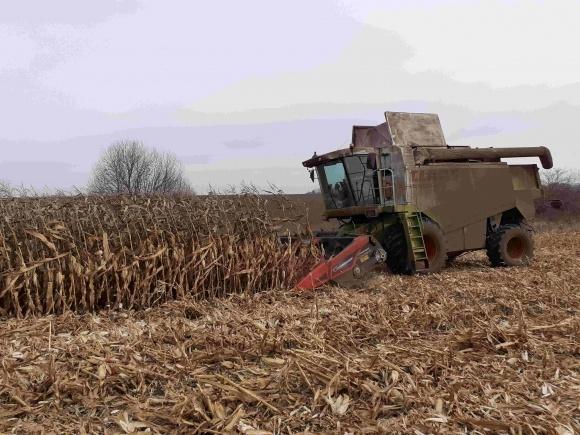 Чемпион среди агрохолдингов по урожайности кукурузы фото, иллюстрация