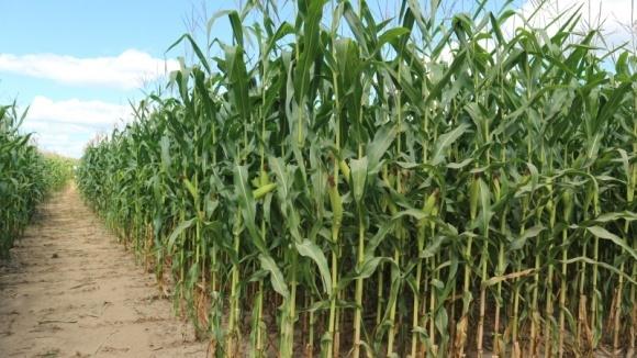 Дифференцированное внесение удобрений при выращивании зерновых и масличных фото, иллюстрация