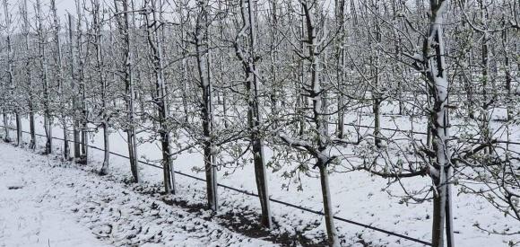 Закордонний досвід захисту садів від заморозків фото, ілюстрація