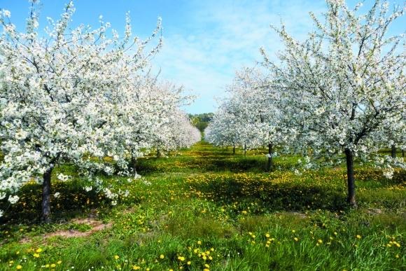 Вредоносность насекомых в плодовом саду фото, иллюстрация