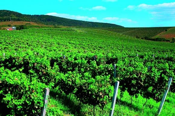 Азы закладки виноградника фото, иллюстрация