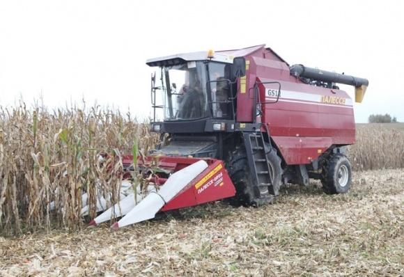 Когда кукуруза «бросается» початками фото, иллюстрация