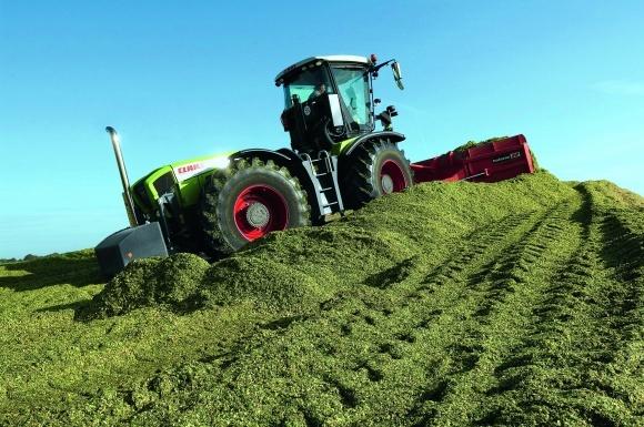 Особливості вирощування  кукурудзи на силос фото, ілюстрація