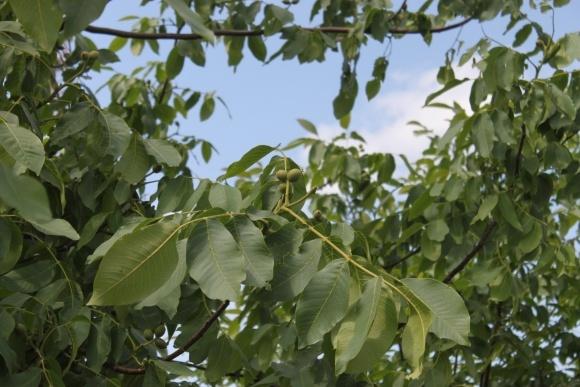 Нужна ли микоризация у плодовых растений фото, иллюстрация
