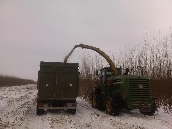 Дебютная жатва энергетической вербы волынских первопроходцев  фото, иллюстрация