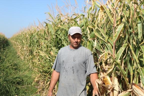 Елементи технології вирощування кукурудзи на Півдні України фото, ілюстрація