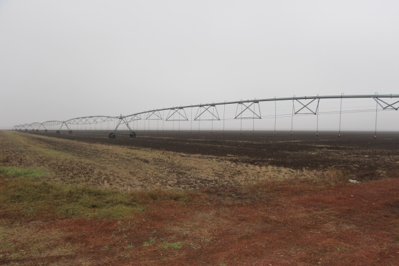 Высокий урожай свеклы: орошение и не только фото, иллюстрация