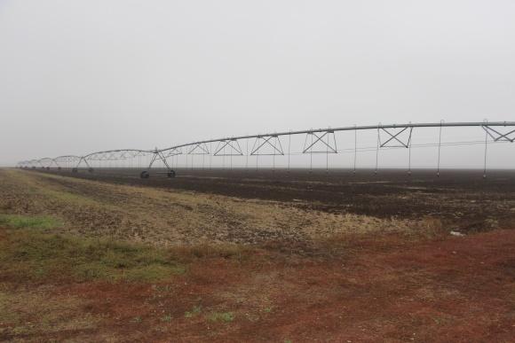 Високий урожай буряка: зрошення і не тільки фото, ілюстрація