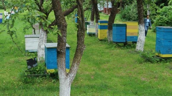 Вимирання бджіл, чому гинуть бджоли в Україні - Пропозиція фото, ілюстрація