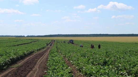 Особливості вирощування овочів в Черкаській області фото, ілюстрація