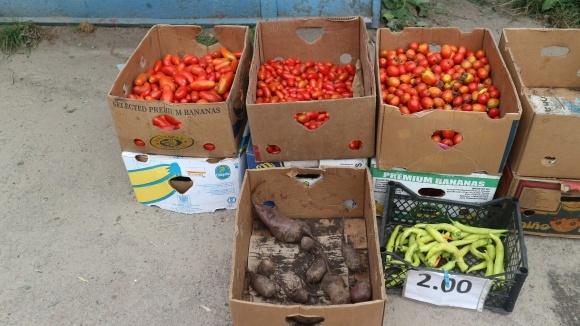 Бізнес план по вирощуванню овочів фото, ілюстрація
