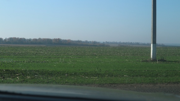 Хороший урожай пшеницы в засушливых условиях: опыт ФХ «Альфа» фото, иллюстрация