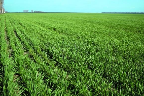 Особенности осенних подкормок зерновых культур  фото, иллюстрация