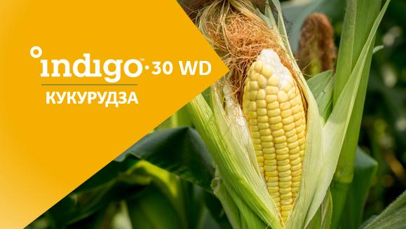 Мікробіологічна обробка насіння Indigo 30: рентабельна інвестиція 4:1 фото, ілюстрація