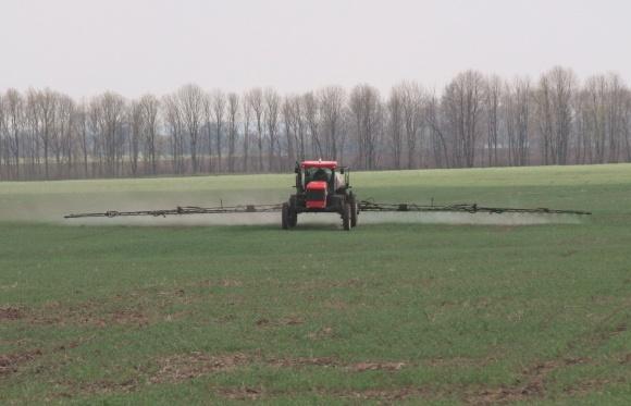 Контроль бур'янів у посівах озимої пшениці фото, ілюстрація