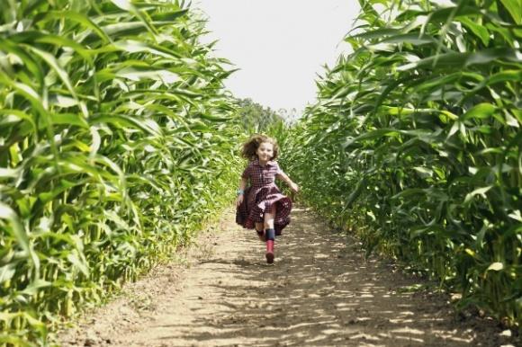 Як організувати кукурудзяний лабіринт? Правила і приклади фото, ілюстрація