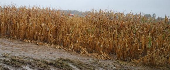 Посев кукурузы: Скорость? Прижимное усилие? Главное – глубина фото, иллюстрация