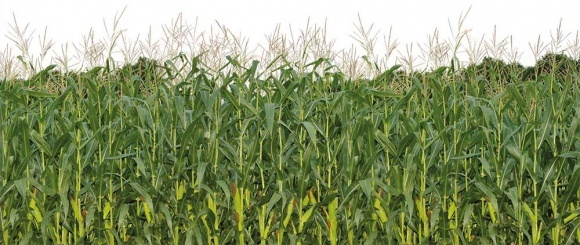 Розмова начистоту з керівником господарства: де взяти якісне насіння і як реалізувати його потенціал? фото, ілюстрація