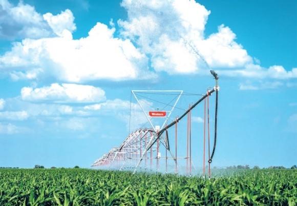 Как поднять урожайность кукурузы вчетверо фото, иллюстрация