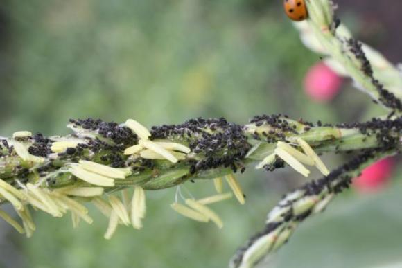 Як захистити врожай від шкідників  та бур'янів  фото, ілюстрація