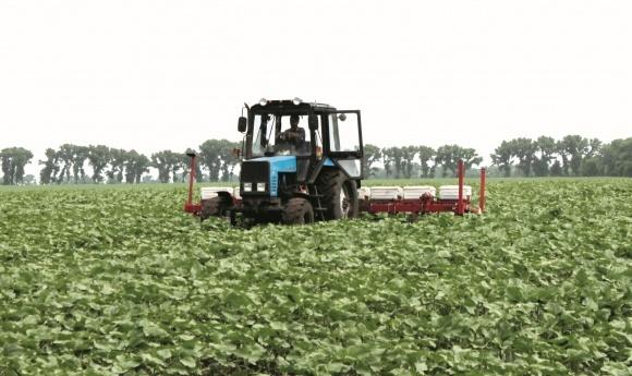 Автоматичне керування культиваторами для міжрядного обробітку ґрунту просапних фото, ілюстрація