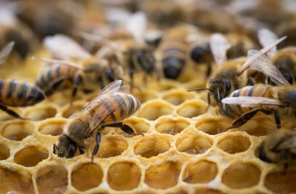 Ринок меду в Україні:  поточна кон'юнктура і прогноз фото, ілюстрація