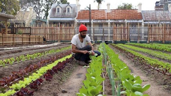 Ферми повертаються в міста: які результати? фото, ілюстрація