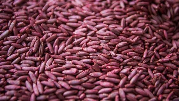 Інсектицидне протруювання зернових культур фото, ілюстрація