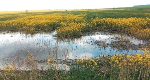 Особенности хозяйствования в условиях переувлажнения почвы и воздуха фото, иллюстрация