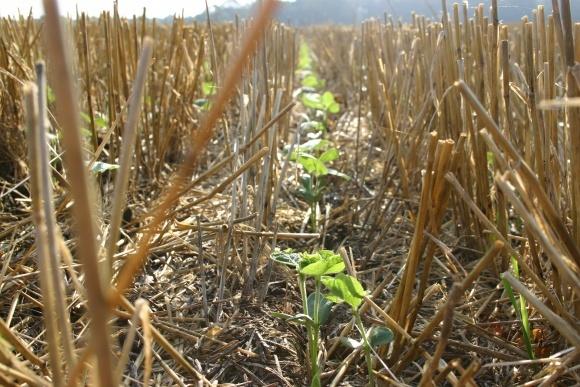 Как перезагрузить почвы, которые не вспахиваются? фото, иллюстрация